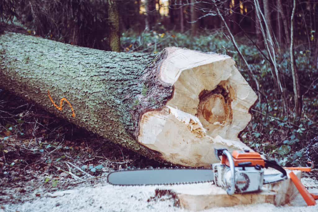 chainsaw next to large tree
